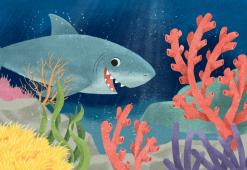 takakofisher_shark