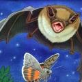 RChrustowski_BIG BROWN BAT2