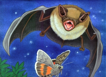 RChrustowski_BIG BROWN BAT 2