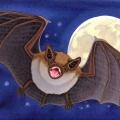 RChrustowski_BIG BROWN BAT