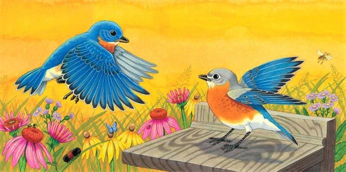 RChrustowski_BLUE SKY BLUEBIRD