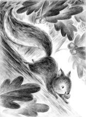 Jennifer Bell - b Jennifer A Bell squirrel