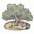 NinaCritteneden_QuercusAgrifolia